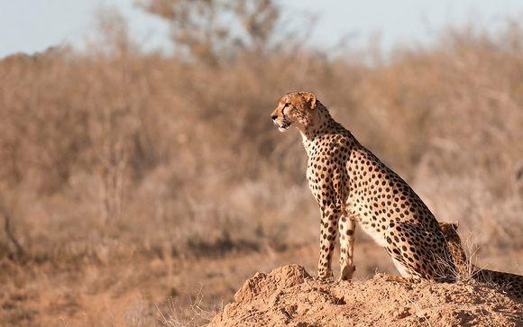 Safari nel Parco nazionale dello Tsavo