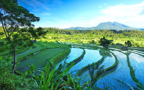 Alla scoperta di Bali: Ubud e Nusa Dua