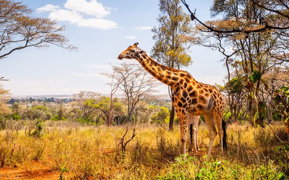 Safari a Shimba Hills / Ngutumi / Saltlick - 3 giorni / 2 notti