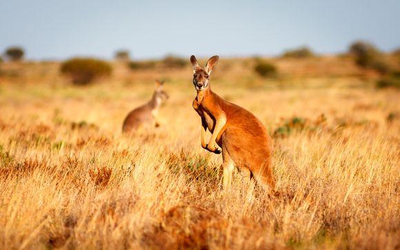 Tour alla Scoperta dell'Australia