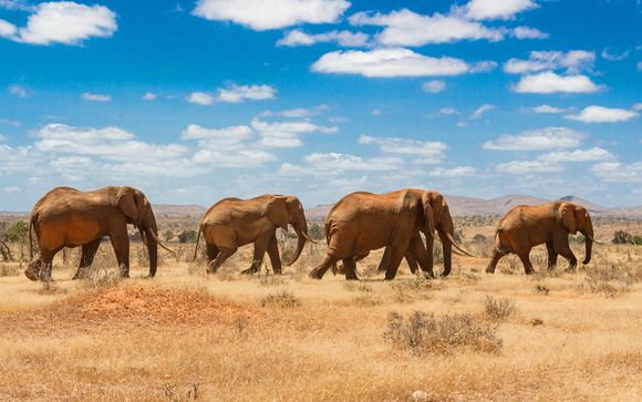 Safari van 3 nachten: Tsavo East/Amboseli/Salt Lick