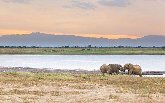 Safari van 1 nacht: Tsavo East