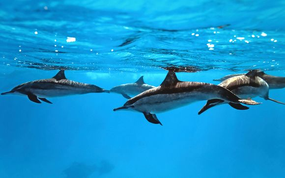 Wasini Sea Safari Excursion