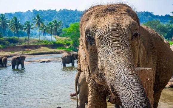 Sri Lanka Wildlife Tour 4*
