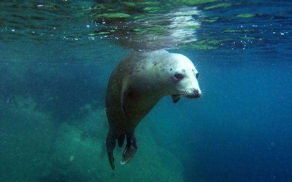 Seal Snorkelling Package