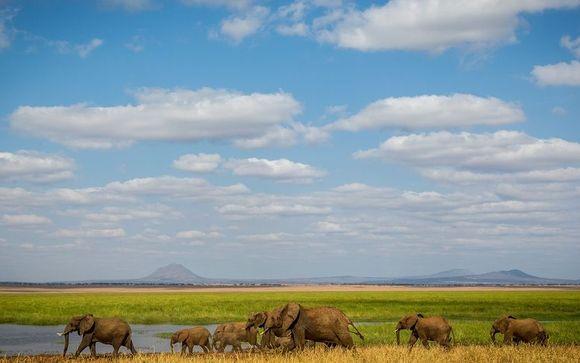 Optional Tanzania Safari