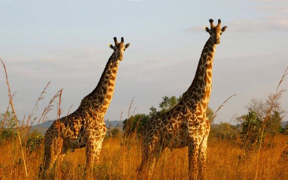 Your Optional Safari