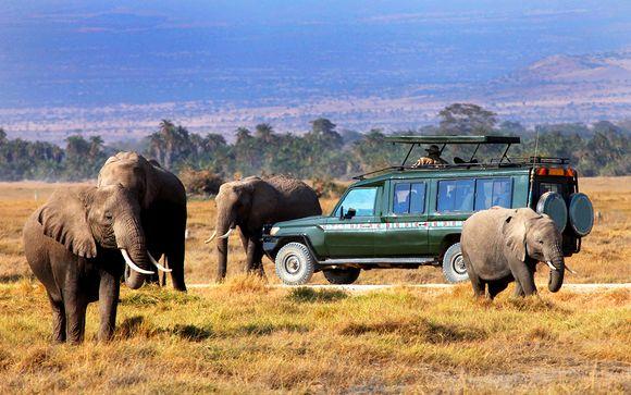 The Zubeida 4* & Safari Adventure