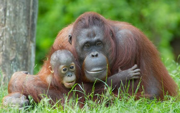 Malaysia Wildlife, City & Beach Holiday 4*