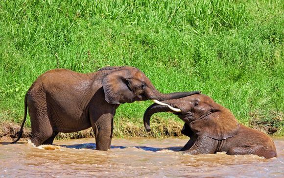 Your 3-Night The Essentials of Tanzania Safari Itinerary