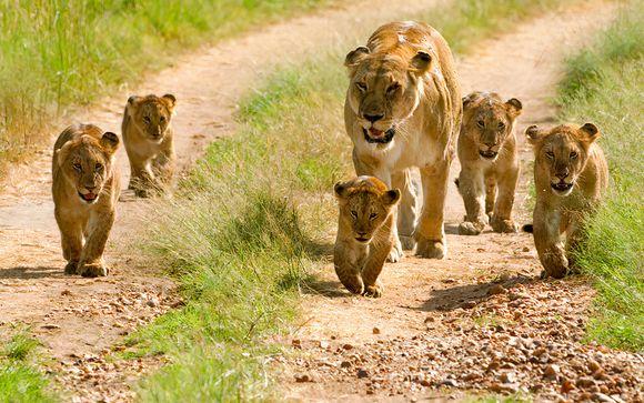 Vos safaris en un clin d'œil (offre 1)