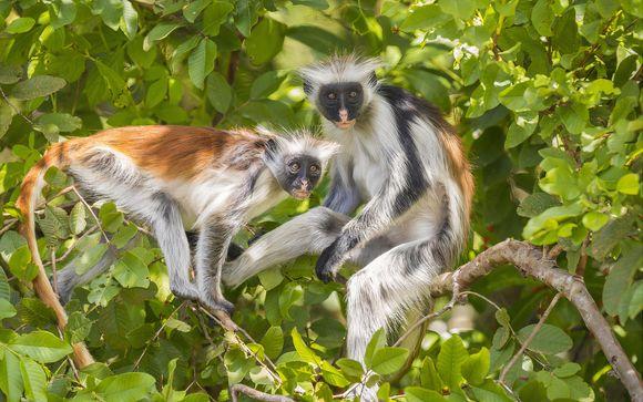 Excursion Forêt de Jozani : «Les singes rouges de Zanzibar»