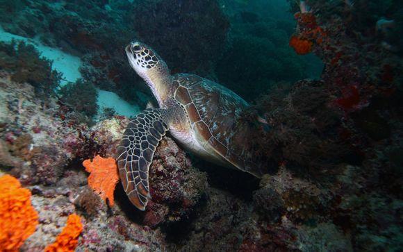 Tour al atardecer y nado con tortugas