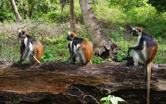 Visite de la Forêt de Jozani - Demi-journée