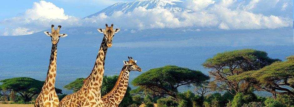 Réalisez un Safari au Kenya aux panoramas exceptionnels